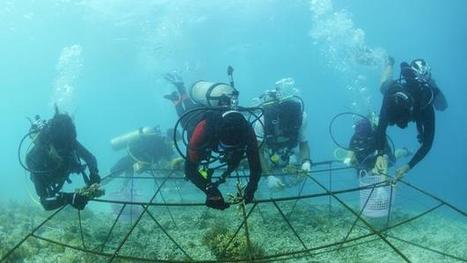 Could electric biorocks save coral reefs?   Marine Technology   Scoop.it