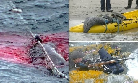 Victory for Sea Shepherd and Seals in Scotland   Oceans and Wildlife   Scoop.it