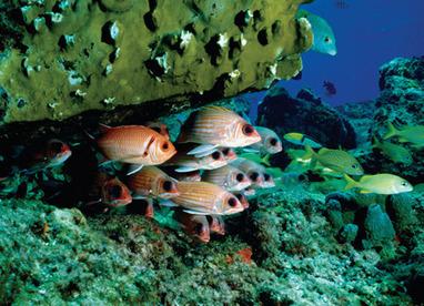 Freedom Bay St Lucia Investmen | haoyahimel | Scoop.it