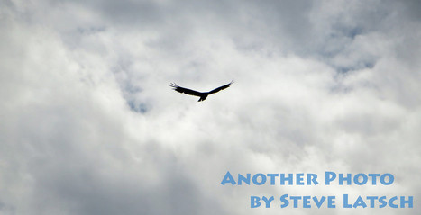 Soaring Predator | Travel Musings and Photography | Scoop.it