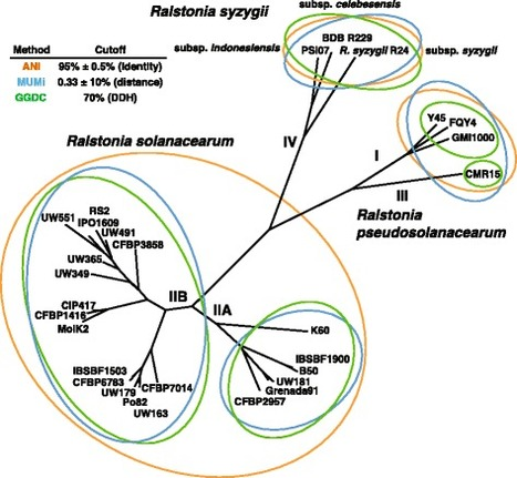 BMC Genomics: Genomic and proteomic evidence supporting the division of the plant pathogen Ralstonia solanacearum into three species (2016) | Effectors and Plant Immunity | Scoop.it