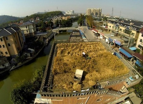 Rooftop Agriculture – Chinese Farmer Turns House Roof into Fertile Farmland | Strange days indeed... | Scoop.it