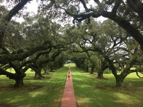 Tweet from @Mikeaveli2682 | Oak Alley Plantation: Things to see! | Scoop.it