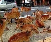 Deer | Japanese Sweets And Coffee | Scoop.it