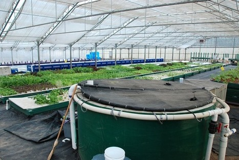 USA - Can we grow crops using 90% less water? | Aquaponics in Action | Scoop.it