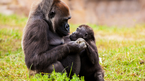 Are Animals Empathetic? | Empathy and Compassion | Scoop.it