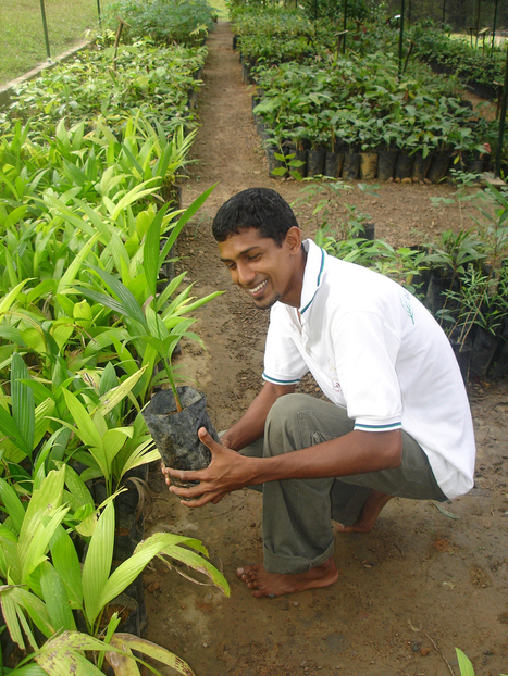 Sri Lanka Destination Projects - Responsible Tourism   Travel and Tourism Case Studies   Scoop.it