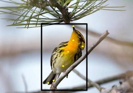 What's that bird? New website identifies species by your photo | NGSS Resources | Scoop.it