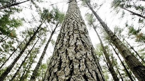 Aussie firm buys Marlborough forestry land | Timberland Investment | Scoop.it