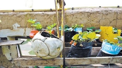 Agricultura en la urbe. Una política de estado para vivir mejor - La Razón (Bolivia) | Cultivos Hidropónicos | Scoop.it