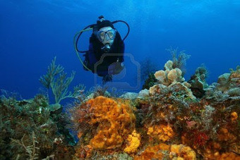 SCUBA SCOOP/latest dive stories: Diving Doc: Preventing and Treating Coral Scrapes | All about water, the oceans, environmental issues | Scoop.it
