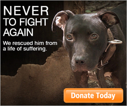 Video: Inside Look at Massive Dog Fighting Bust | End dog fighting! | Scoop.it