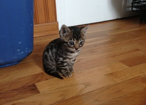 """Kitten Of The Day: """"I've Seen Some Serious Stuff"""" 