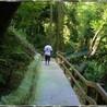 Roatan Honduras Excursions