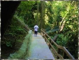 Zip Line Roatan Honduras | Roatan Honduras Excursions | Scoop.it
