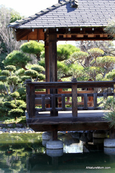 Lovely:  Japanese Garden, Hayward | Japanese Gardens | Scoop.it