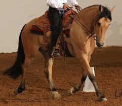 """""""Breaking News! The USDF has now officially opened it's Door to Western Dressage!   Horse and Rider Awareness   Scoop.it"""
