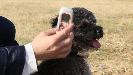 Zac, il cane che risponde al cellulare - La Repubblica Palermo.it | Oltre il Cuore di Lucilla News | Scoop.it