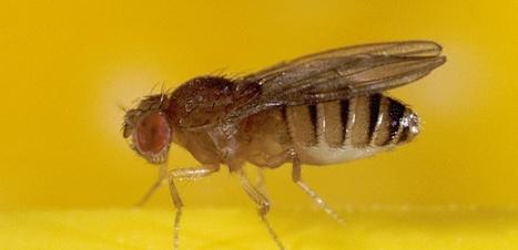 Les mouches auraient-elles des émotions ? | EntomoNews | Scoop.it