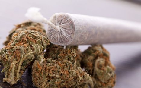 25 Odd Facts About Marijuana | Substance Use and Addiction | Scoop.it