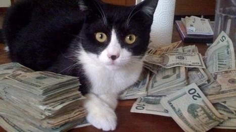 Mon chat peut-il gérer mon portefeuille boursier? | Les chats c'est pas que des connards | Scoop.it