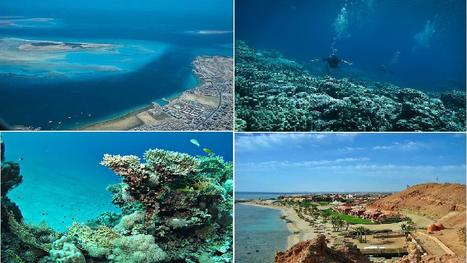 Red Sea Coast At Egypt   Nile tours: Egypt Holidays give you that Perfect Sabbatical   Scoop.it