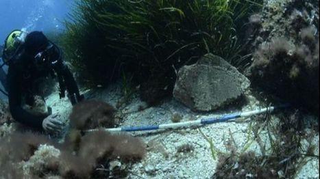 Capri, trovati in mare mosaici e marmi della villa di Tiberio - Tiscali | Immersioni sub in Italia | Scoop.it