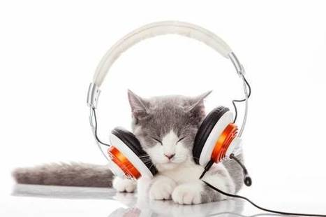 Scientists designed music specifically for cats, and it is pretty beautiful | animals and prosocial capacities | Scoop.it
