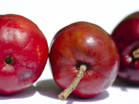 Bequia Plums | Bequia - All the Best! | Scoop.it