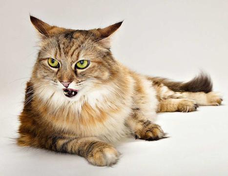 Всплеск эмоций: фотографии животных от Эвана Кафки   Amuze   Scoop.it