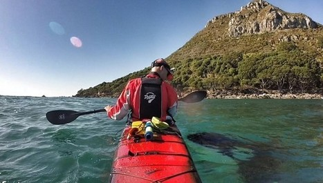 Wild Orcas Surprise Kayaker Who Totally Trusts Them | Nature Animals humankind | Scoop.it