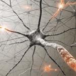 Neuro-Training: Erlebnis mit Ergebnis | Weiterbildung | Scoop.it