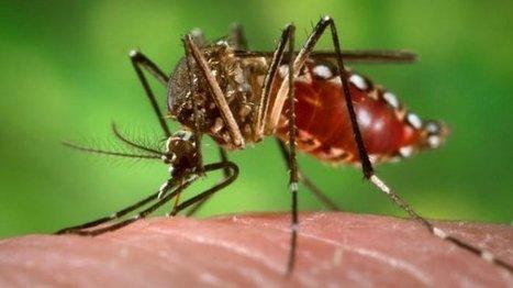 Brésil : le Zika en cause dans des malformations congénitales   EntomoNews   Scoop.it