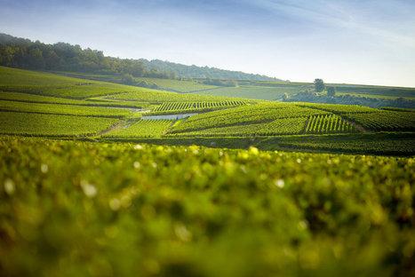 Champagne : les Vignerons indépendants plaident pour un engagement environnemental. | TRADCONSULTING 4 YOU | Scoop.it