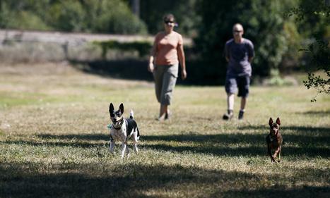 Dog fight: Coon Rapids closes dog park that divided neighborhood | Minnesota Pet News | Scoop.it