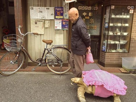Guy Walks His Pet Tortoise Around the Streets of Tokyo | Xposed | Scoop.it