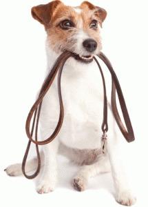 Pourquoi promener son chien ? | La passion des animaux | Educateur canin en Alsace - Etoile des bergers | Scoop.it