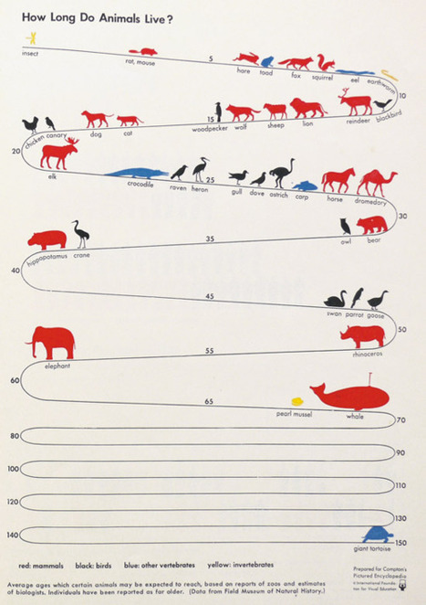 How long different animals live, in a vintage...   Animals100   Scoop.it