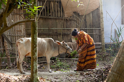 Sustainable Intensification in Farming | Big Picture Agriculture | CCAFS: CGIAR research program on Climate Change, Agriculture and Food Security | Agroecology | Scoop.it