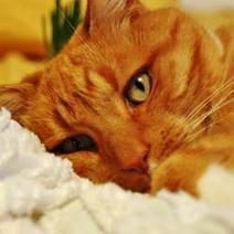 Mise bas du chat | CaniCatNews-santé | Scoop.it