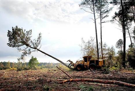 The Conservation Fund chosen to manage NCSU's Hofmann Forest | Timberland Investment | Scoop.it