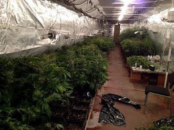 Localizado un local en Mataró con 500 plantas de marihuana - El Periódico de Catalunya | thc barcelona | Scoop.it