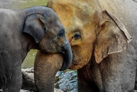 'Elephant Moms' vs. 'Tiger Moms': The Case for Coddling Your Kid   Informal Learning: What Parents Need to Know   Scoop.it