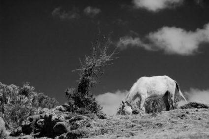 Actualité > Un cheval inconnu broutait en Éthiopie au Pliocène | Cheval et Nature | Scoop.it