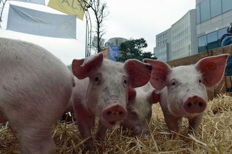 La Commission européenne débloque 500 millions d'euros pour soutenir le secteur agricole | Revue de presse agricole de la FUGEA | Scoop.it