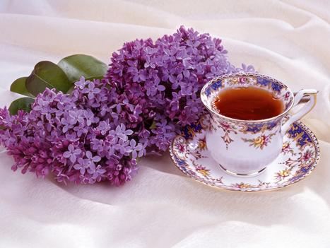 Few Benefits of Lilac Tea (Syringa Vulgaris) | ForHealthBenefits | Scoop.it