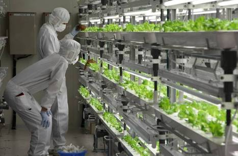 Out Of Old Factory, Japanese Company Sells... High-Tech Lettuce | leapmind | Scoop.it