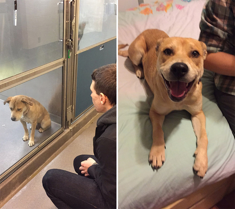 16+ Before & After Pics Show The Difference A Day Of Adoption Can Make To A Shelter Pet | Pet Health | Scoop.it
