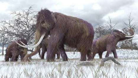 We could bring the woolly mammoth back to life, but should we? | Jeff Morris | Scoop.it