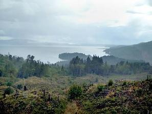 Oregon to buy 1,310 acres of forest land near Dabob Bay for $3.96 million | Timberland Investment | Scoop.it